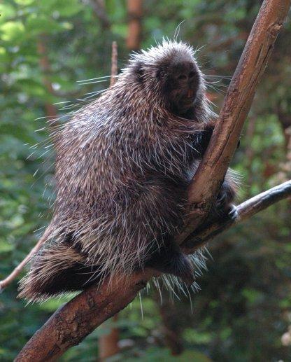 Porcupine-BioDome